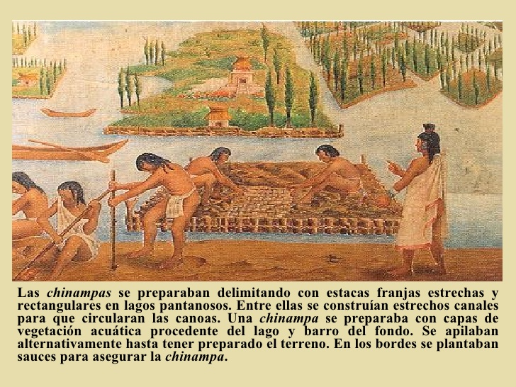 chinampas aztecas - photo #15