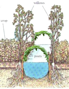 [Thumbnail for Chinampas_trellises_diagram_MidwestPermaculture.com.jpg]
