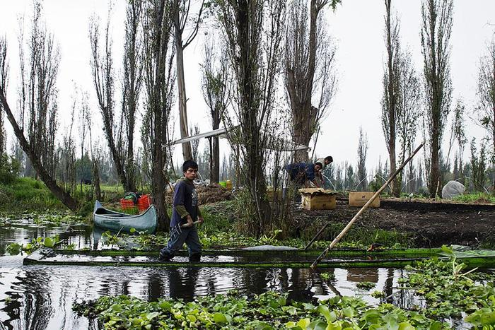 [Thumbnail for chinampas_workers_munchies.vice.com.jpg]