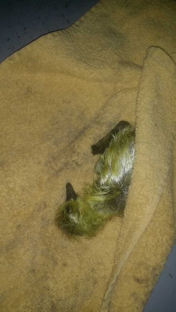 [Thumbnail for Baby-Sunshine-1.jpg]