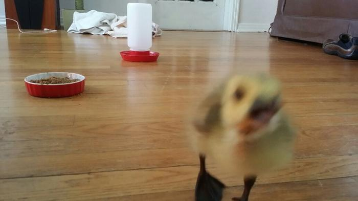 [Thumbnail for Baby-Sunshine.jpg]