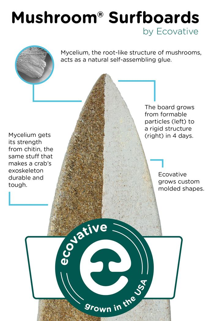 [Thumbnail for MYCELIUM-SURFBOARD_infographic_Ecovativedesign.com.jpg]