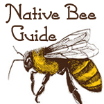 native bee guide ebook