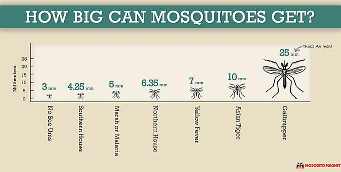 [Thumbnail for mosquito-size-comparison-infographic-mm-2jpeg.jpg]
