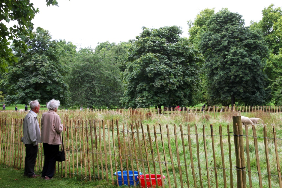 How do i make this fence fencing forum at permies thumbnail for elderly couple wide jpgg publicscrutiny Image collections