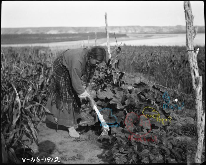 [Thumbnail for Hidatsa-Indian-woman-hoeing-squash-with-a-bone-hoe-edited.jpg]