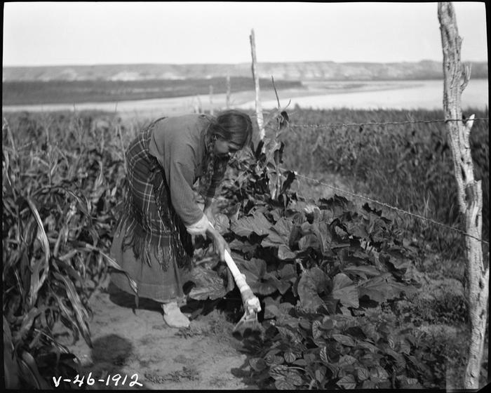 [Thumbnail for Hidatsa-Indian-woman-hoeing-squash-with-a-bone-hoe.jpg]