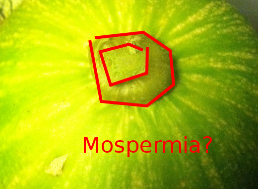 [Thumbnail for mospermia-1.png]