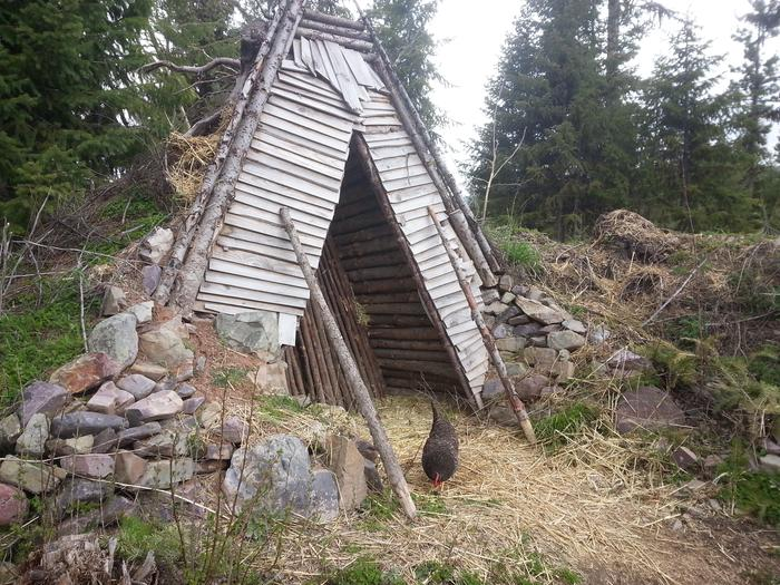 earth-sheltered winter poultry coop, poultry not included