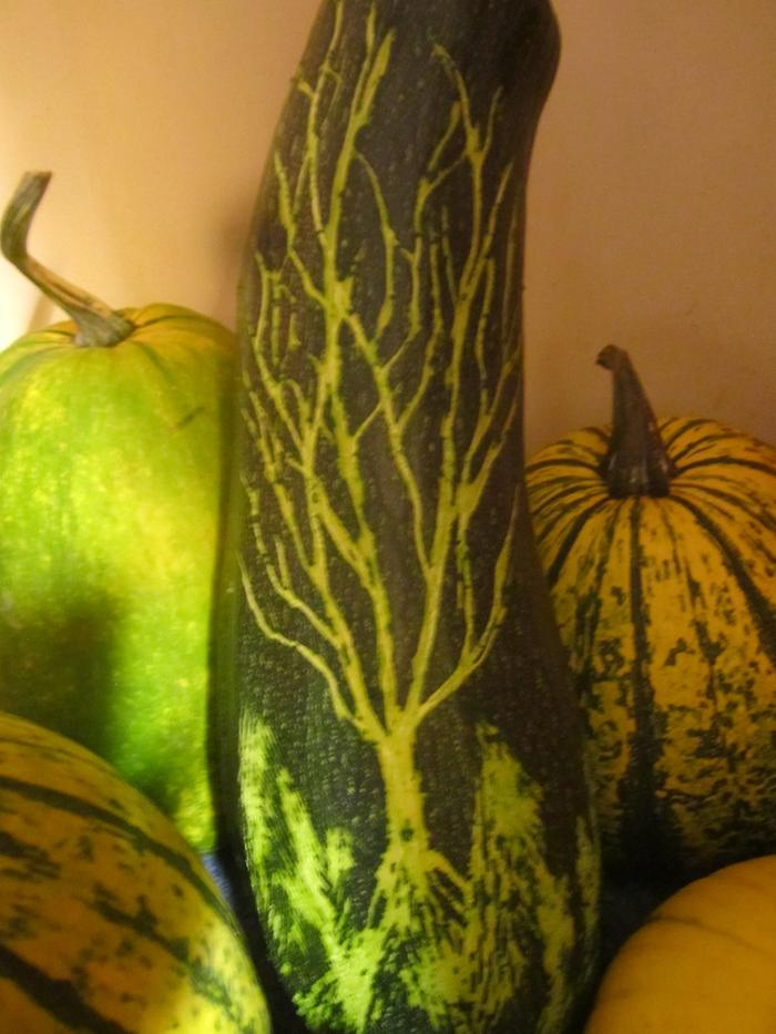 [Thumbnail for carved-marrow-squash.jpg]