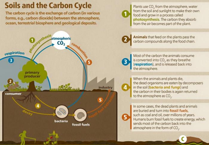 [Thumbnail for soil-carbon-cycle.jpg]