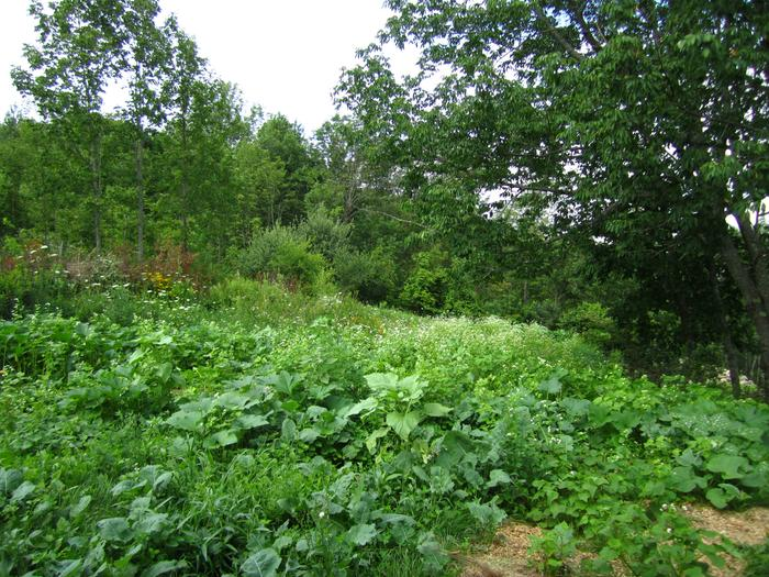 [Thumbnail for permaculture-polyculture-cover-crop.jpg]