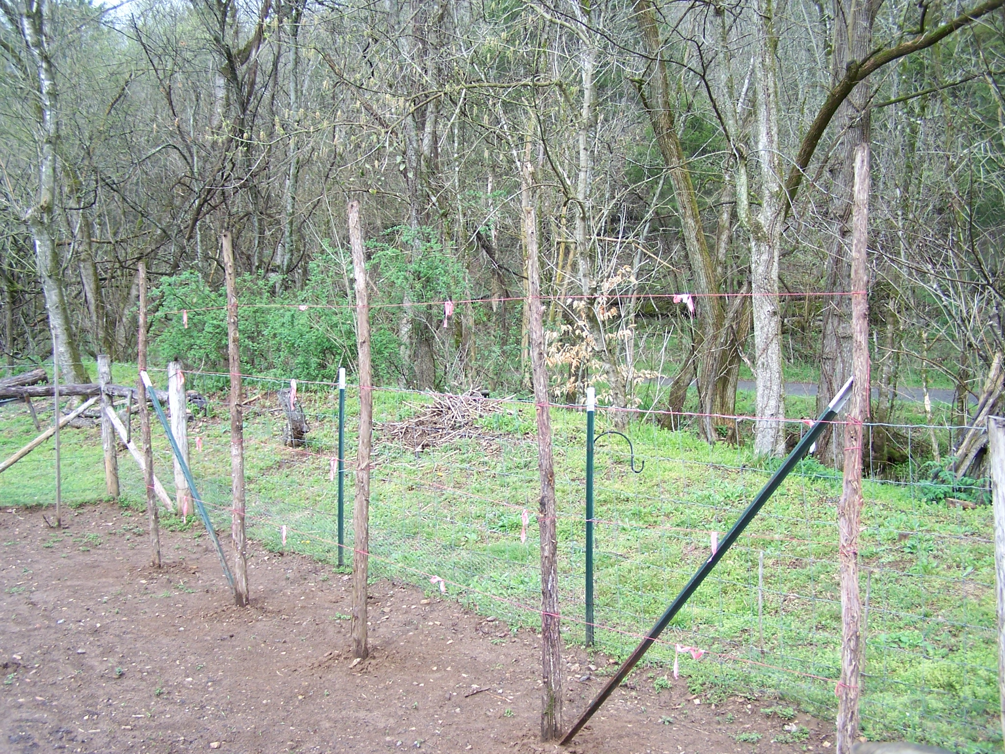 simple trellis for green beans organic forum at permies