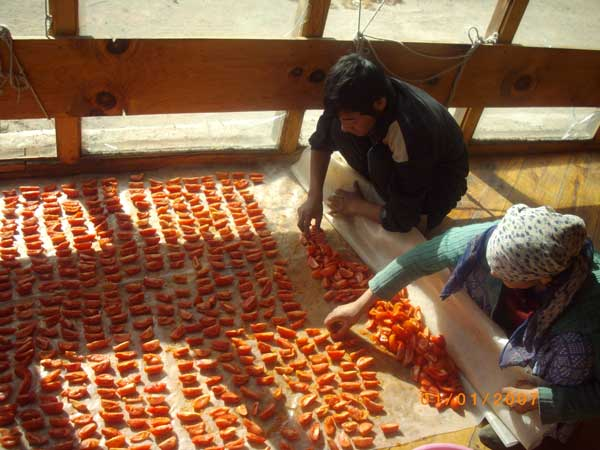 [Thumbnail for 1-Drying-tomatoes.jpg]