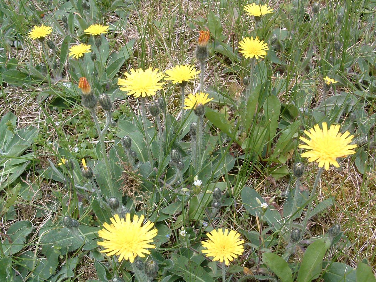Keywords Flowering Weeds and Tags