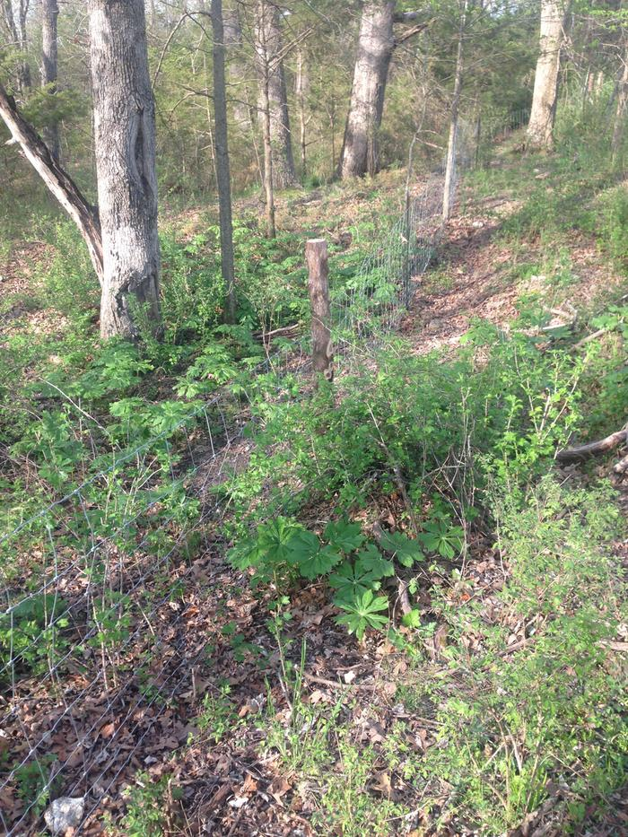 Perimeter fence through the woods [Solved] (fencing forum at