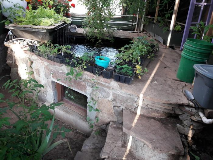 [Thumbnail for Brians-Masonry-aquaponics-north-side-June-10th-2018.jpg]