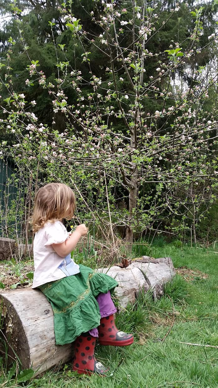 eating kale by the finally-flowering apple tree!
