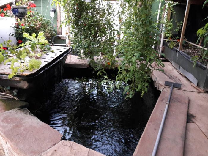 [Thumbnail for Earth-sheltered-greenhouse-aquaponics-brook-trout-August-19th-2018.jpg]