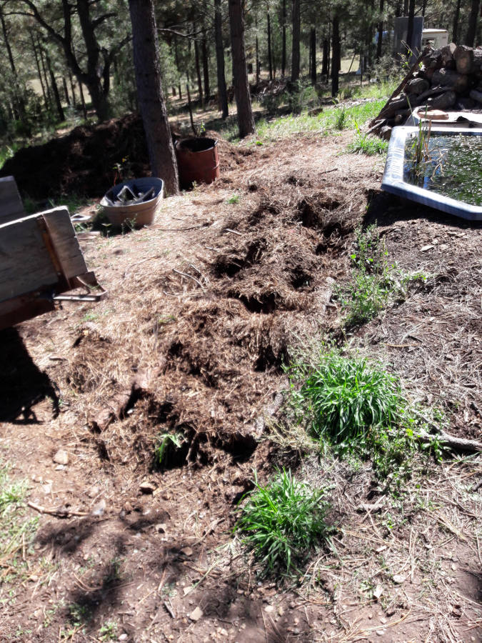 [Thumbnail for Hugle-progress-soil-collected-layer-of-compost-on-hugle-ready-for-more-soil-9-27-18.jpg]