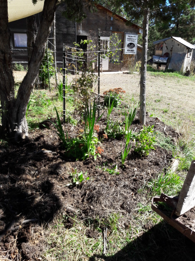 [Thumbnail for Forest-duff-soil-layer-into-south-facing-gardens-in-front-yard-Fun-too-Sept-2018.jpg]