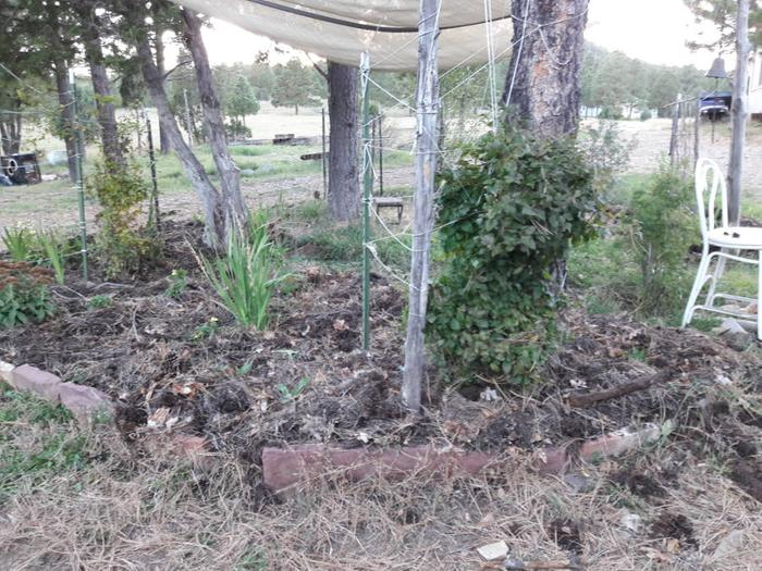 [Thumbnail for Forest-mulch-transplant-project-second-half-garden-September-2018.jpg]