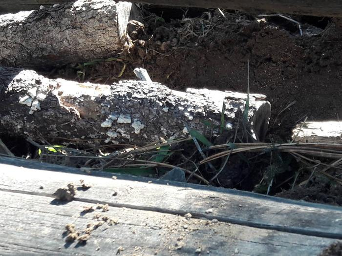[Thumbnail for Hugelculture-project-added-more-rotting-wood-under-the-big-logs-October-6th-2018.jpg]
