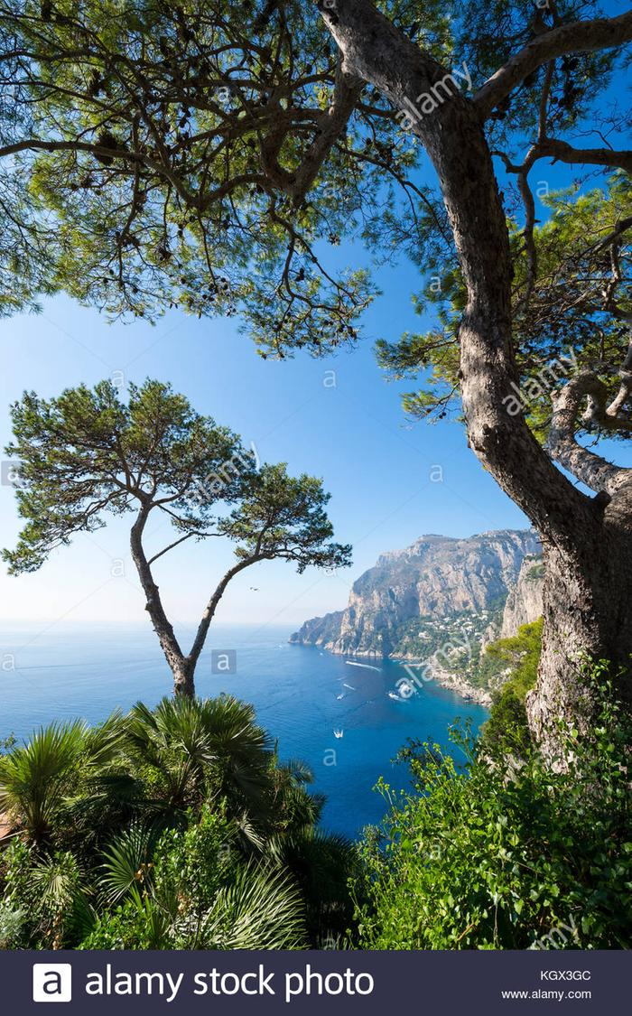 [Thumbnail for view-through-pine-trees-to-the-iconic-cliffs-of-capri-island-in-italy-KGX3GC.jpg]