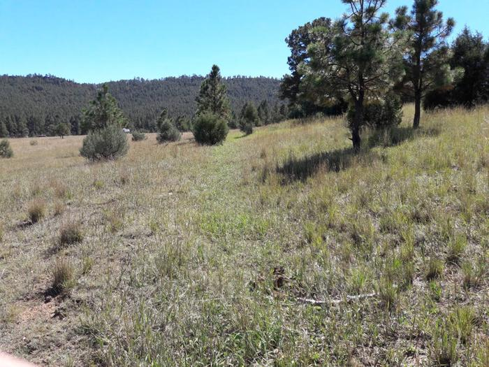[Thumbnail for Las-Tusas-Ranch-ancient-swale-middle-section-north-facing-hill-Sept-28th-2018.jpg]