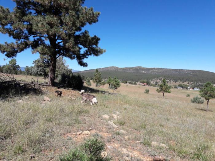 [Thumbnail for Las-Tusas-Ranch-ancient-swale-Our-dogs-Sept-28th-2018.jpg]