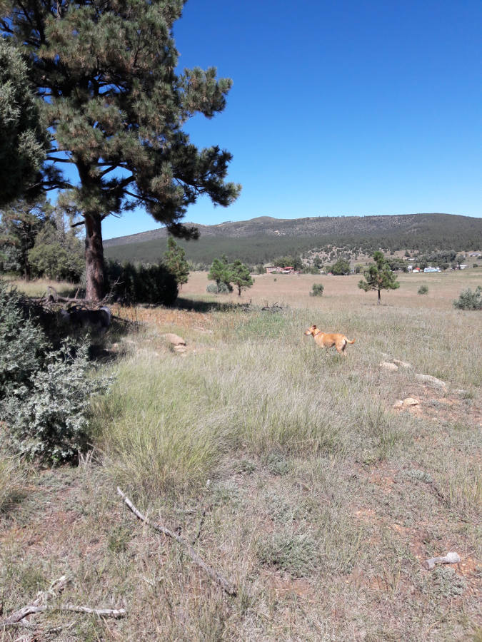 [Thumbnail for Las-Tusas-Ranch-ancient-swale-east-side-north-facing-hill-Sept-28th-2018.jpg]