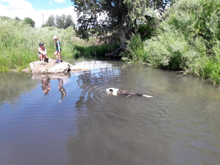[Thumbnail for Sapello-River-Brittany-Rachel-Rock-Buddy-swimming-July-15-2018-.jpg]