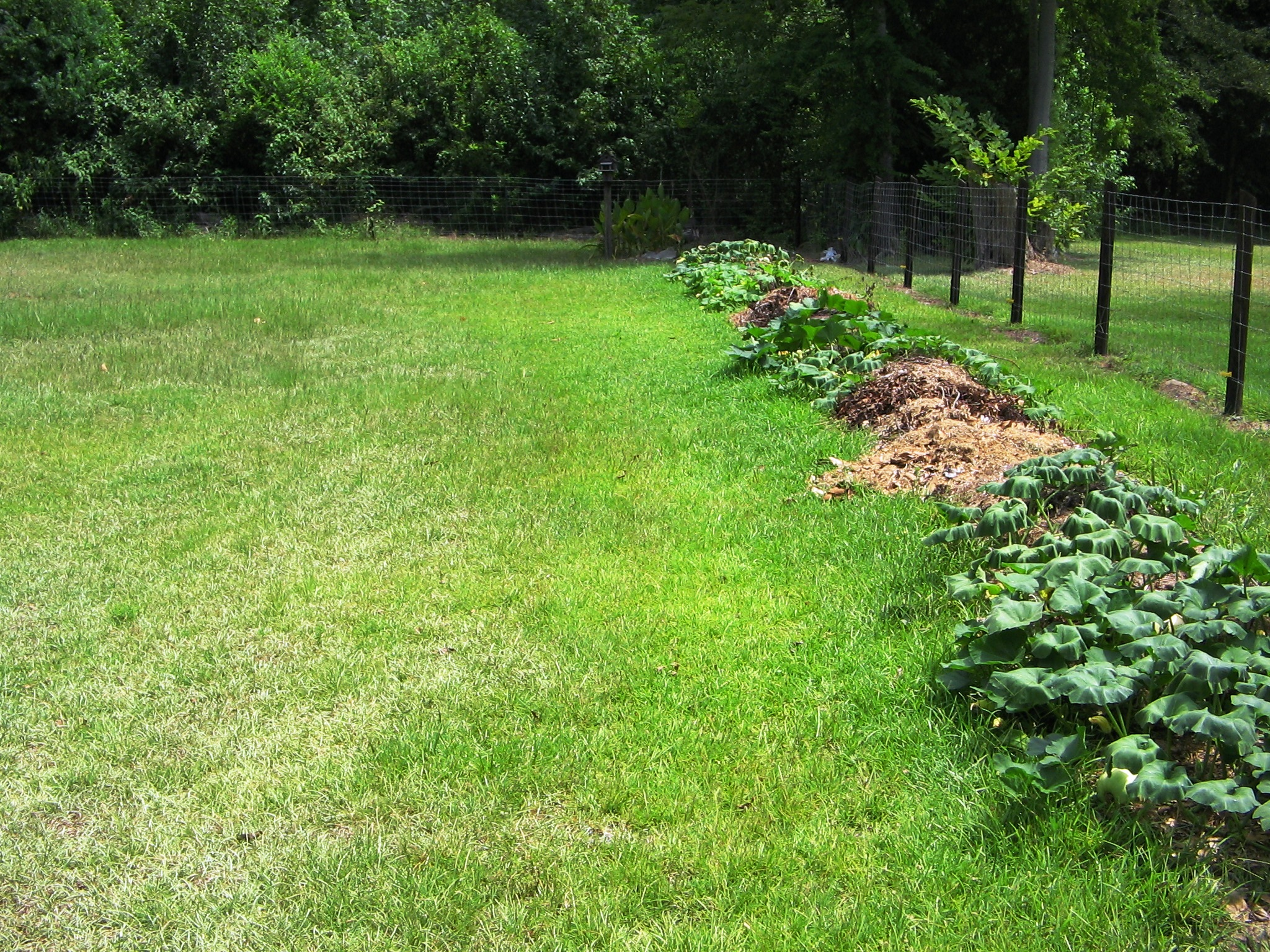 Want A Perfect Grass Lawn Lawn Forum At Permies