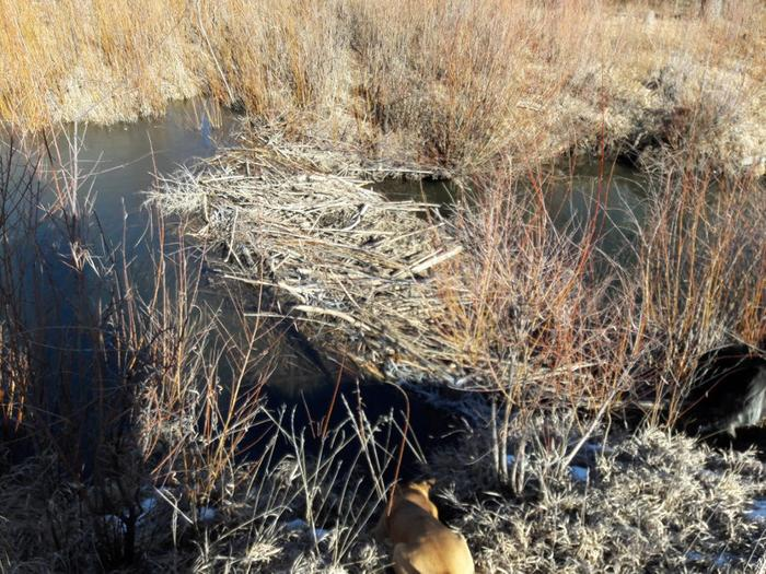 [Thumbnail for Sounds-of-water-beaver-dam-Sapello-River-Dec-2018.jpg]