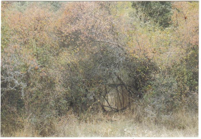 [Thumbnail for sloe hedge in autumn orchard.jpg]