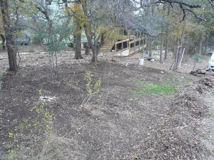 New large pollinator habitat in the front yard where some oaks had died