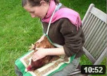 permaculture chicken harvest